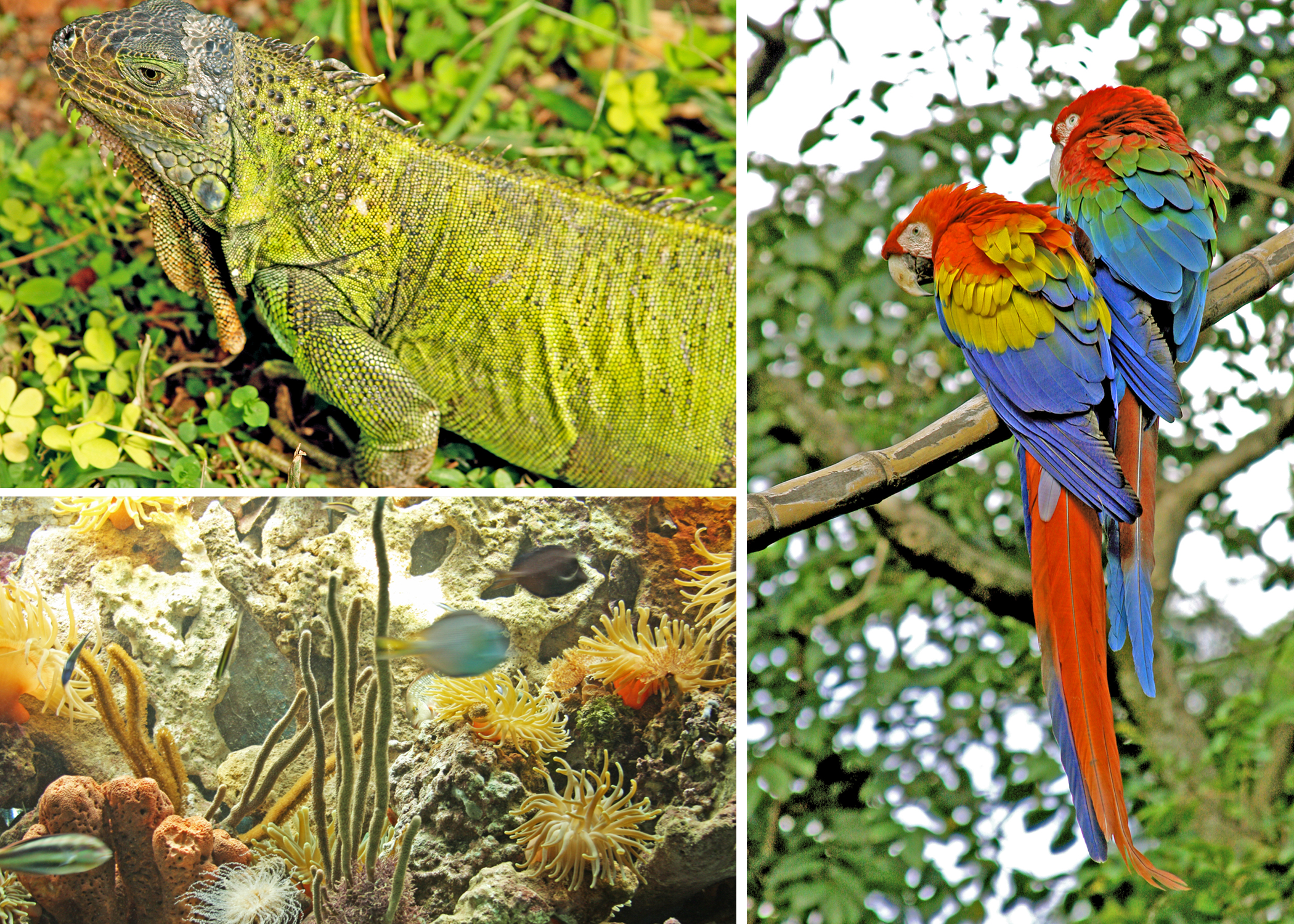 Photos of iguana, aves and fish from Colombia