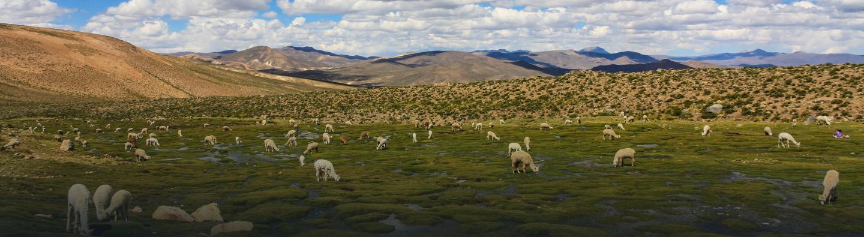 Paisaje peruano