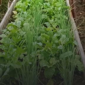 Camas de hortalizas elevadas en Ecuador