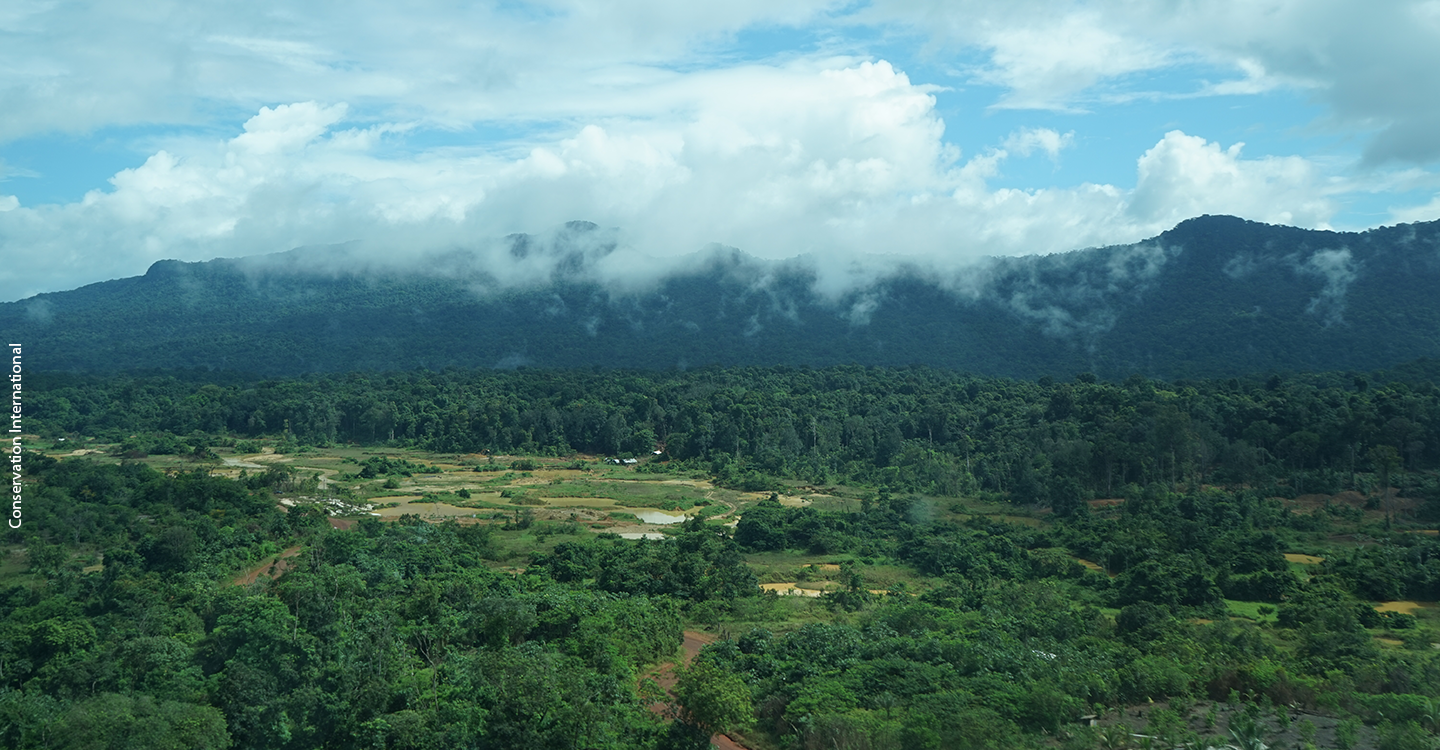 Guyana forest landscape and mining activity